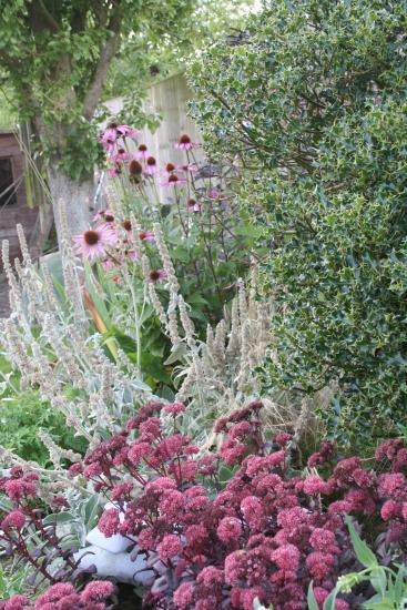 planting design ashbourne