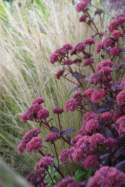 sedum and stipa