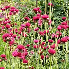 Boggy border? Planting ideas for heavy wetsoils.