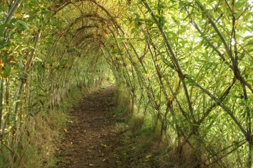 living willow tunnel kirk ireton derbyshire aut 12 042