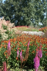 Clashing Astilbe, helenium and filipendula