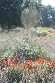 Misty Deschampsia cespitosa and chinos with helenium in the foreground