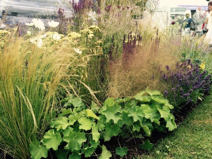 stipa tenuissima, achillea, alchemilla mollis,brezia media, salvia and lavender