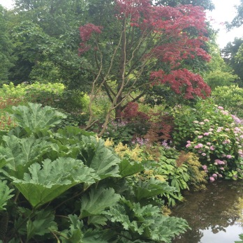 Waterside planting with the stunning Gunnera manicata