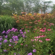 Phlox, Echinacea and Filipendula