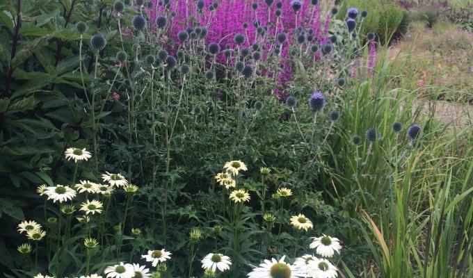 Trentham Gardens – Part one – Piet Oudolf's FloralLabyrinth