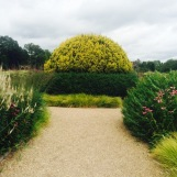 Mixed species topiary, edged by grasses