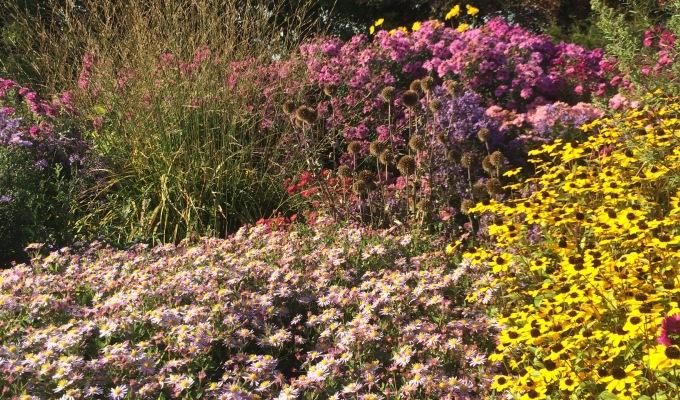 Autumn Garden Inspiration – Norwellnurseries.