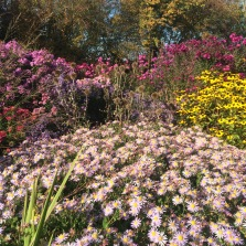 asters and echinops