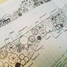 the planting plan