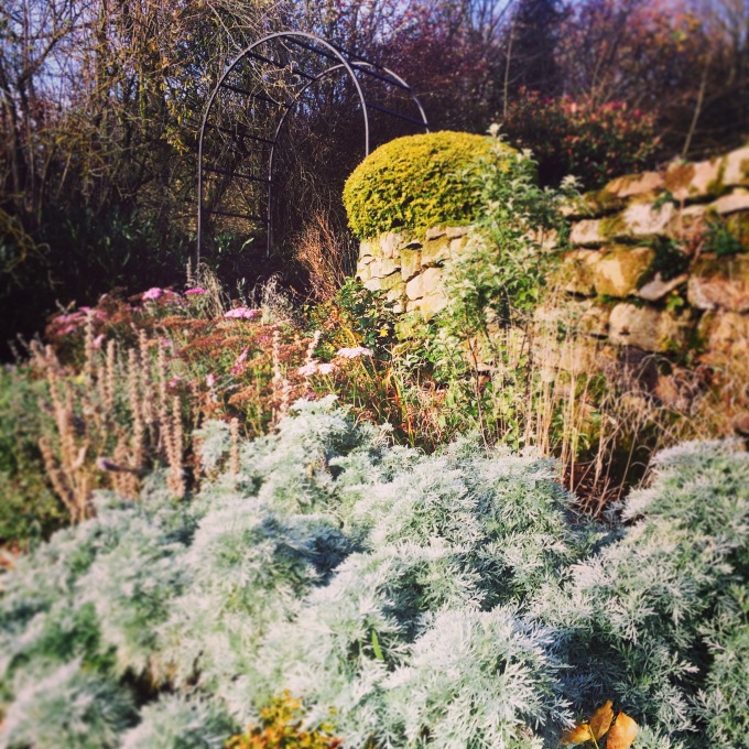 Artemesia 'Powis Castle' in foreground Winter '16