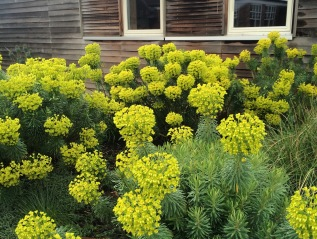 7 Favourite Plants for Drought AND What is 'Chop &Drop'?