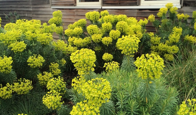 7 Favourite Plants for Drought AND What is 'Chop & Drop'?