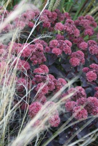 Family Garden; Hognaston,Ashbourne